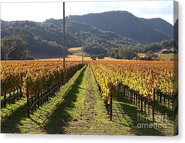 Napa Valley Vineyard . 7d9020 Canvas Print by Wingsdomain Art and Photography