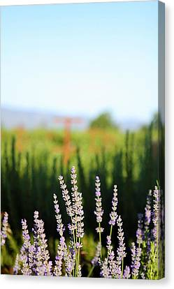 Napa View Canvas Print by Ty Helbach