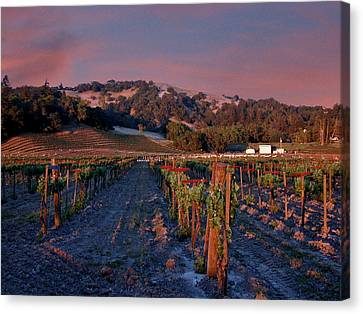Nappa Valley Vineyard At Sunset Canvas Print by Douglas Barnett