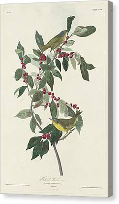 Nashville Warbler Canvas Print by John James Audubon