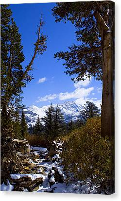 Naturally Framed Canvas Print by Chris Brannen