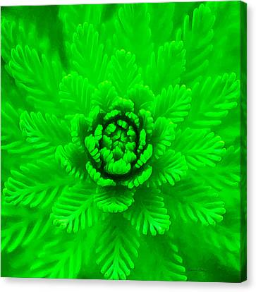 Nature's Abstract  Canvas Print by Stacey Chiew