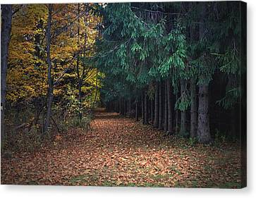 Nature's Path Canvas Print by Frank Salvaggio