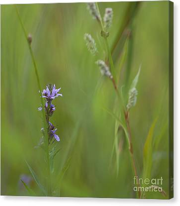 Natures Poetry... Canvas Print by Nina Stavlund