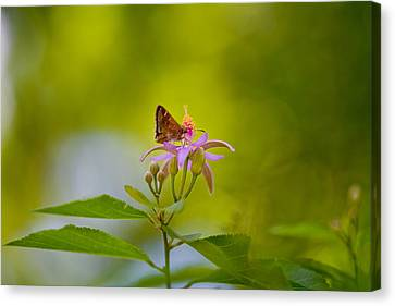 Nectar Treat Canvas Print by Az Jackson