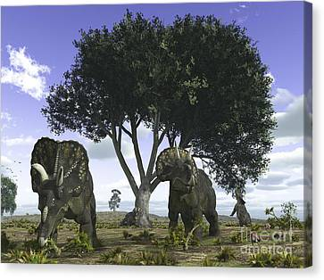 Nedoceratops Graze Beneath A Giant Oak Canvas Print by Walter Myers