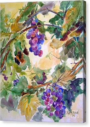 Neighborhood Grapevine Canvas Print by Kathy Braud