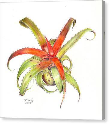 Neoregelia Pendula Canvas Print by Penrith Goff