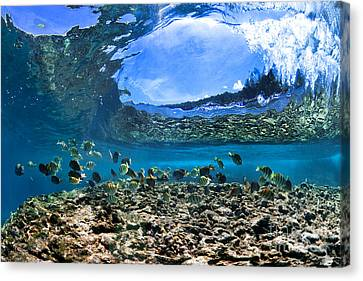 Neptunes Eye Canvas Print by Sean Davey