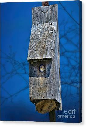 Nest Box In The Spring Canvas Print by Henry Kowalski