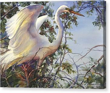 Nesting Egret Canvas Print by Sue Zimmermann