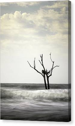 Nesting Canvas Print by Ivo Kerssemakers