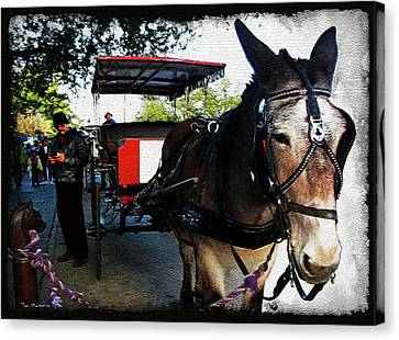 New Orleans Carriage Ride Canvas Print by Joan  Minchak