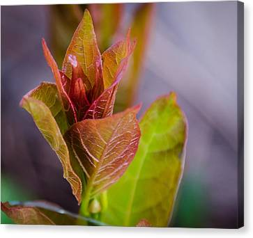 New Spring Leaf Canvas Print by Don L Williams