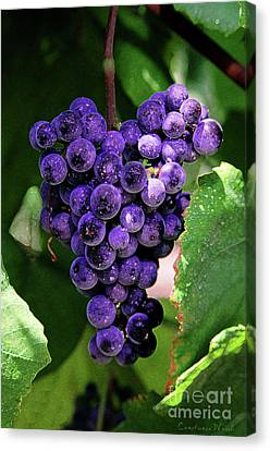 New Wine Canvas Print by Constance Woods