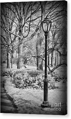 New York City - Winter - Central Park Canvas Print by Paul Ward
