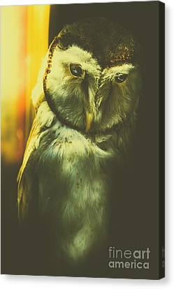 Night Owl Canvas Print by Jorgo Photography - Wall Art Gallery