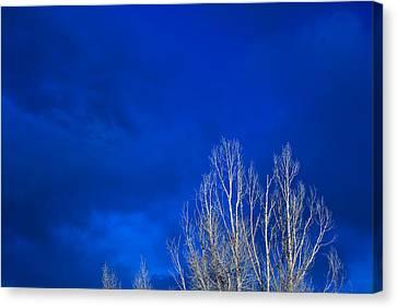Night Sky Canvas Print by Steve Gadomski