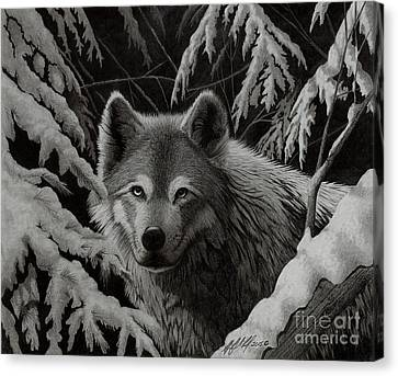 Night Wolf Canvas Print by Stephen McCall