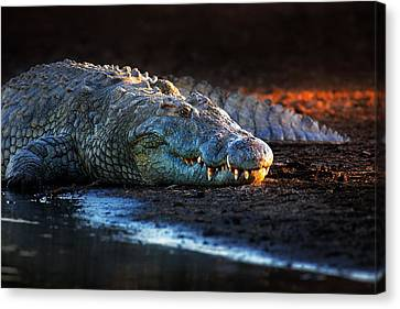 Nile Crocodile On Riverbank-1 Canvas Print by Johan Swanepoel