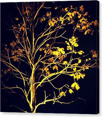 Nocturnal Tree Canvas Print by Contemporary Art