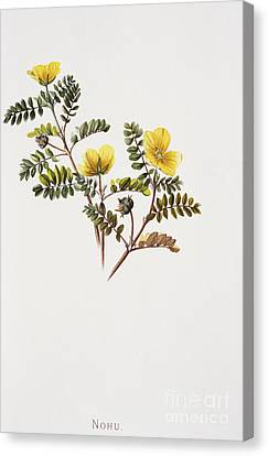 Nohu Flower - Vintage Canvas Print by Hawaiian Legacy Archive - Printscapes