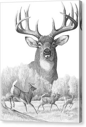 North American Nobility Whitetail Deer Canvas Print by Laurie McGinley