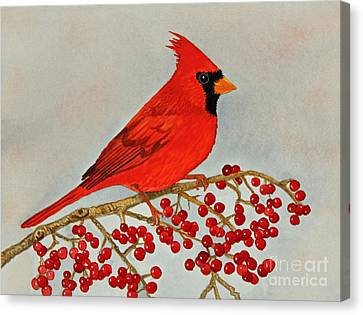 Northern Cardinal Canvas Print by Norma Appleton