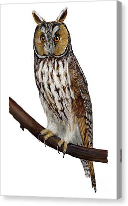 Northern Long-eared Owl Asio Otus - Hibou Moyen-duc - Buho Chico - Hornuggla - Nationalpark Eifel Canvas Print by Urft Valley Art