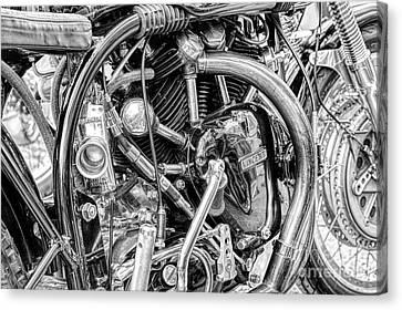 Norvin Monochrome Canvas Print by Tim Gainey