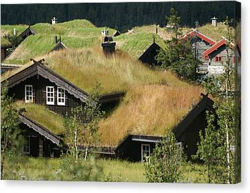 Norwegian Grass Roofs Canvas Print by Jessica Rose
