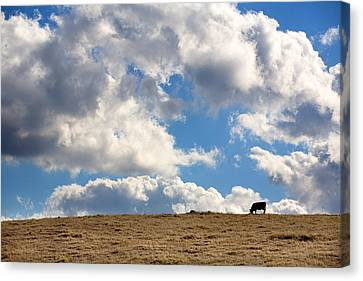 Not A Cow In The Sky Canvas Print by Peter Tellone