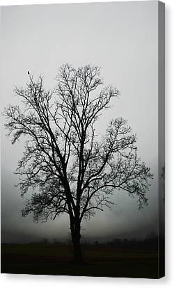 November Tree In Fog Canvas Print by Patricia Motley