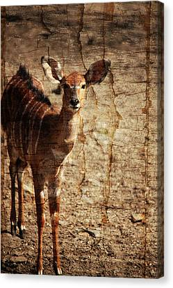 Nyala Art Canvas Print by Karol Livote