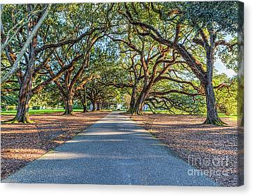Oak Alley Endless Trees Canvas Print by Tod and Cynthia Grubbs