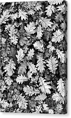 Oak Canvas Print by Tim Gainey