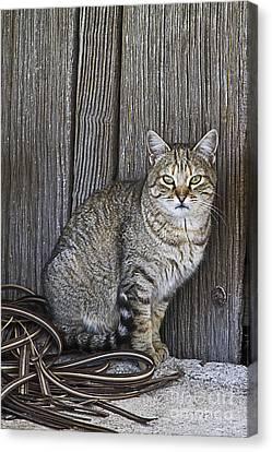 Observant Pet-cat Canvas Print by Heiko Koehrer-Wagner