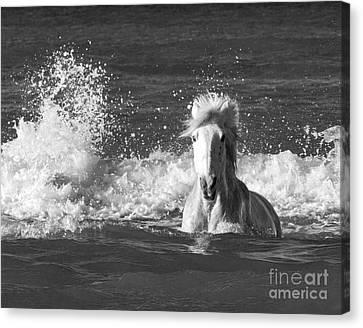 Ocean Splash Canvas Print by Carol Walker