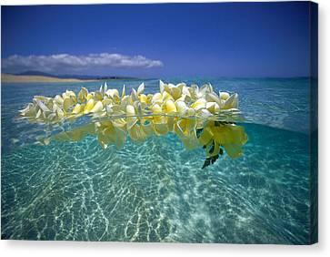 Ocean Surface Canvas Print by Vince Cavataio - Printscapes