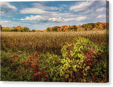 October Canvas Print by Bill Wakeley