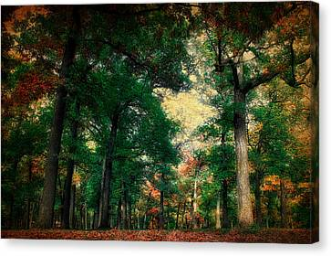 October In The Forest Textured 02 Canvas Print by Thomas Woolworth
