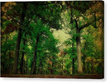 October In The Forest Textured Canvas Print by Thomas Woolworth