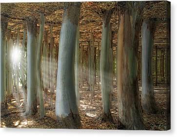 Odd Forest Canvas Print by Melanie Viola