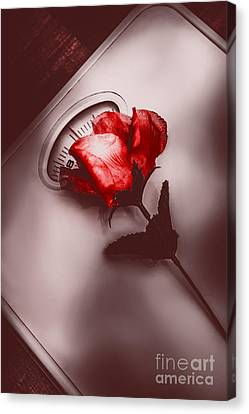 Of Love And Weighting Canvas Print by Jorgo Photography - Wall Art Gallery