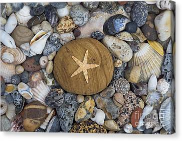 Of The Beach Canvas Print by Tim Gainey