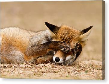 Oh No, You Didn't - Funny Fox Canvas Print by Roeselien Raimond