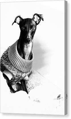 Oh Those Eyes Black And White 3 Canvas Print by Angela Rath