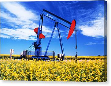 Oil Pumpjack And Canola Field, Arcola Canvas Print by Dave Reede