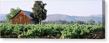 Old Barn In A Vineyard, Napa Valley Canvas Print by Panoramic Images
