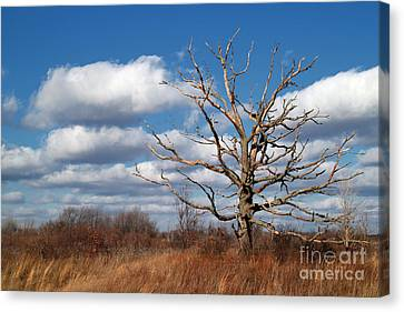 Old Dead Tree Canvas Print by Jeff Holbrook